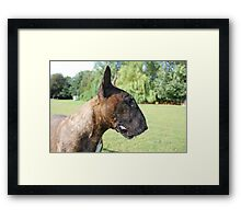 Kenny Bull Terrier Framed Print