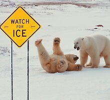 Polar Bears Slip On Ice by Dale O'Dell