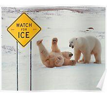 Polar Bears Slip On Ice Poster
