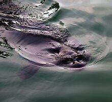 Sealstract by Bluesrose