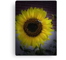 Sunflower bumble Bee 02 Canvas Print