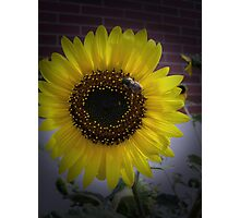 Sunflower bumble Bee 02 Photographic Print