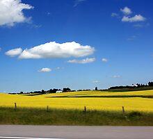 Fields of Gold by PPPhotoArt