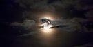 Summer Moon by Darren Burroughs