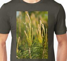 Pine candles tip shoots conifer tree Unisex T-Shirt