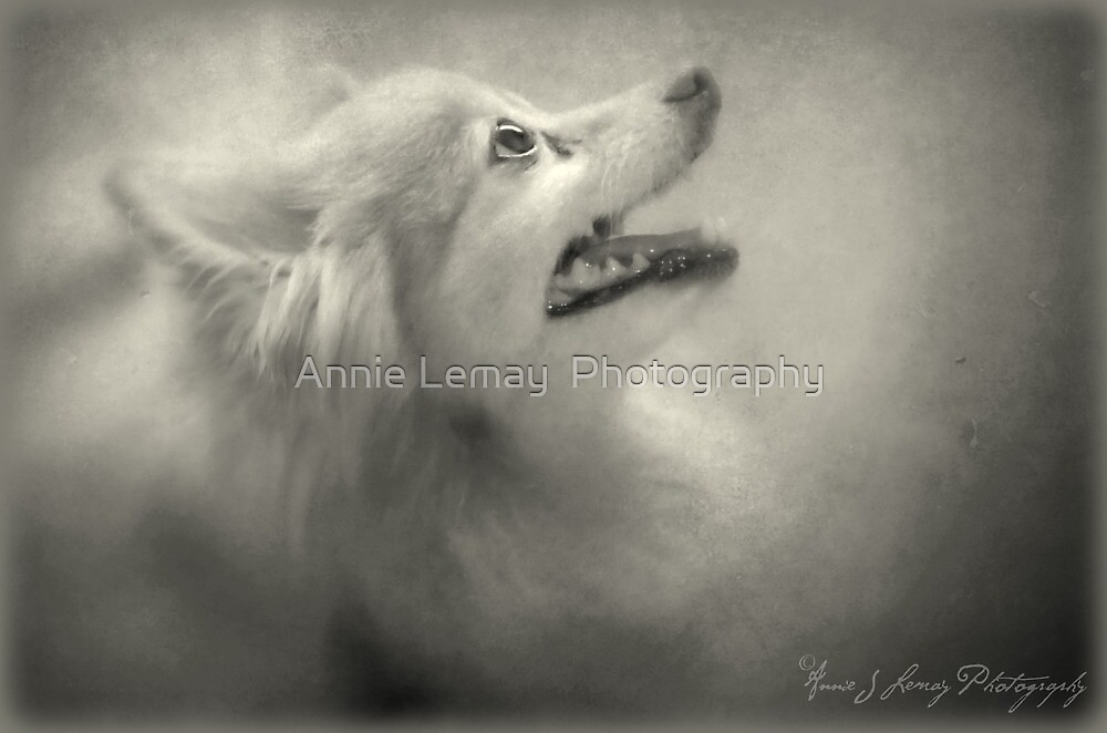 Sandy by Annie Lemay  Photography