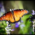 Butterfly Kisses  by Saija  Lehtonen