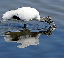 Wood Stork Wading by Joe Jennelle