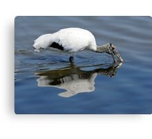 Wood Stork Wading Canvas Print