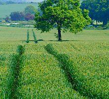 """Summer Grows the Harvest"" by Bradley Shawn  Rabon"