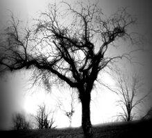 Spirit by Heather King