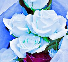 Blue and Red Roses by marymdmed