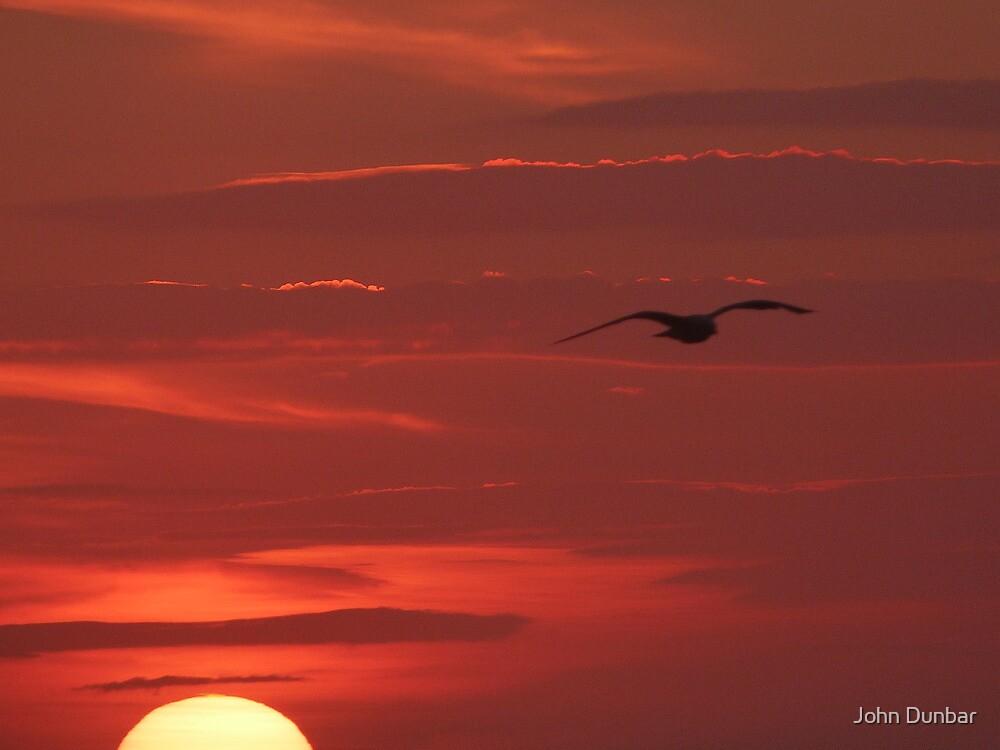 Free to Fly by John Dunbar