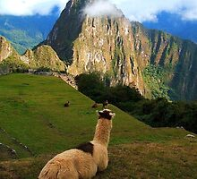 Machu Picchu - Andes by Honor Kyne