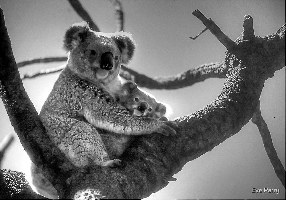 Koala Mum & Baby by Eve Parry
