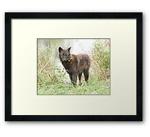 The wolf of the lake Framed Print