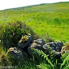 Roadside Rockery, Longmore, Broughshane, County Antrim by Laura Butler