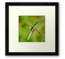 Meadowhawk Framed Print