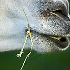 """Up-Close and Personal """"Llama"""" by Doty"""