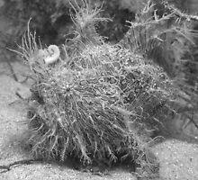 Strped Anglerfish (B&W) by Edjamen