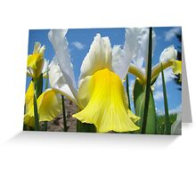 Floral Yellow White Irises Flowers art prints Baslee Troutman Greeting Card