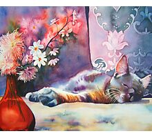 Feline repose Photographic Print