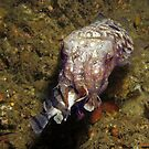 Cuttlefish Dining by Edjamen