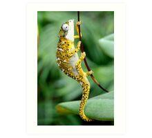 Tiger Chameleon Art Print
