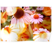 Flowers Basking In The Sun Poster