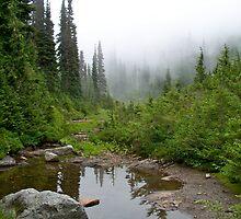Fog over Ipsut Creek by YogiColleen