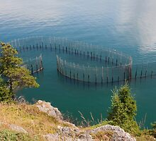 Herring Weir - North Head, Grand Manan by Stephen Stephen