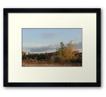 White Marsh Gold 3 Framed Print
