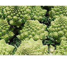 Fibonacci Cauliflower, Public Market, Seattle Photographic Print