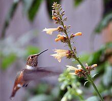 Hummingbird by Jen Moody