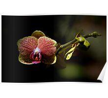 Leu Gardens Orchid Poster