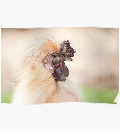 Bad Hair Day - silky rooster Poster