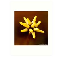 Wild Flowers Western Australia Art Print
