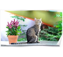 grey striped cat  Poster