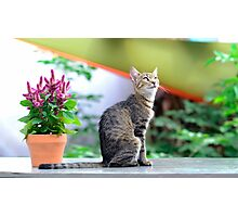 grey striped cat  Photographic Print