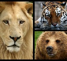 Lions, and tigers, and bears! Oh, my! by Mark Hughes