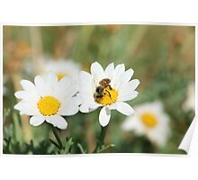 Bee on a Flower Poster