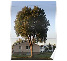 Setting Sun on Tree Poster