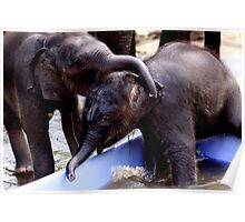 Baby Asia Elephant Poster