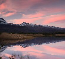Reflected Pink by Gustav Snyman
