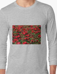 Red roses bunches grow Long Sleeve T-Shirt