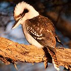 Coogee Kookaburra by Erik Schlogl