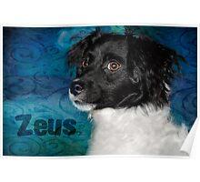 Zeus - aka a bundle of energy Poster