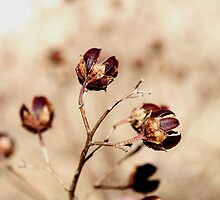Tan plants by Kelly S