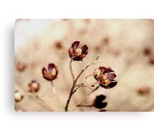 Tan plants Canvas Print
