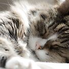 Sleeping Beauty by Amy Collinson